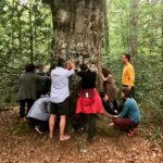 bain de forêt - sylvothérapie - brocéliande - formation - stage - atelier - séance