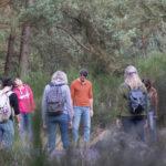 Brocéliande - Sylvothérapie - Bain de forêt - shinrin yoku