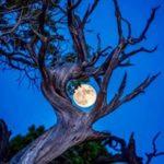 sylvotherapie - bain de foret - nocturne - pleine lune - broceliande
